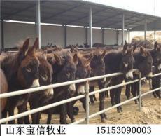 肉驴批发价格多少