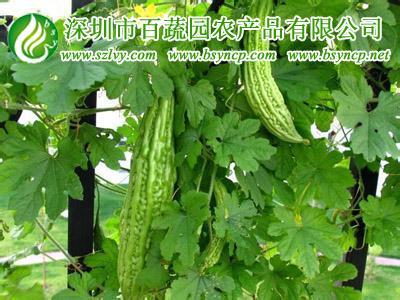 深圳送菜公司讲解蔬菜严加监管方能保障权益
