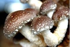 出售香菇银耳木耳蘑菇灯产品